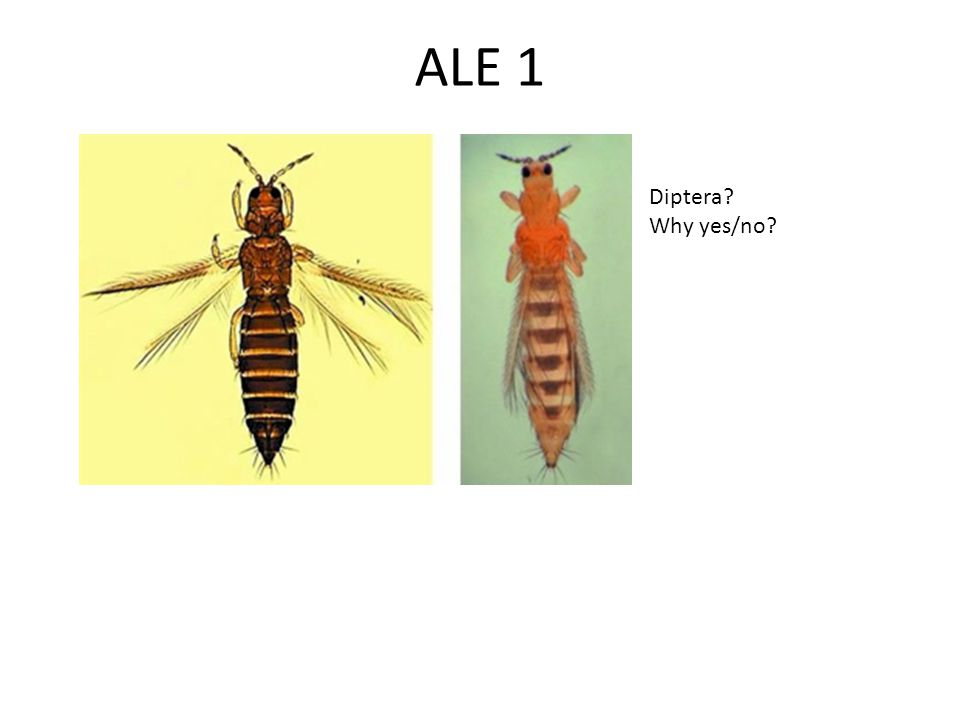 ALE 2 Mosquitoes vector many devastating diseases and in many countries (esp.