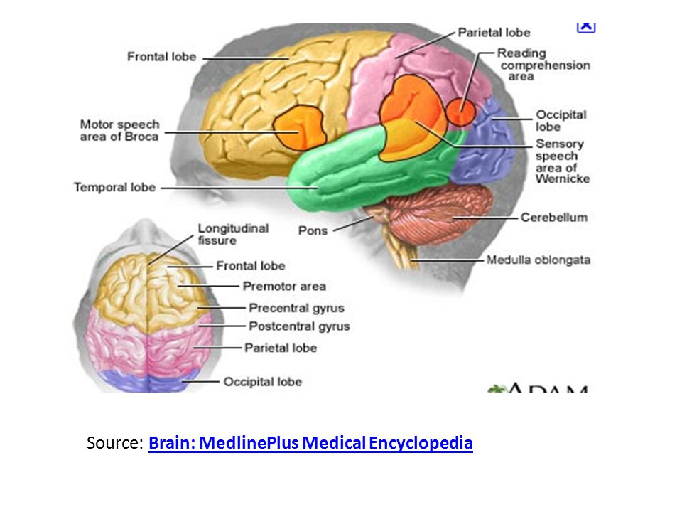 Pathways in language processing Speech production: – Wernicke's area  Broca's area Reading aloud: – Visual cortex  Wernicke's area  Broca's area Speech comprehension: – Auditory cortex  Wernicke's area