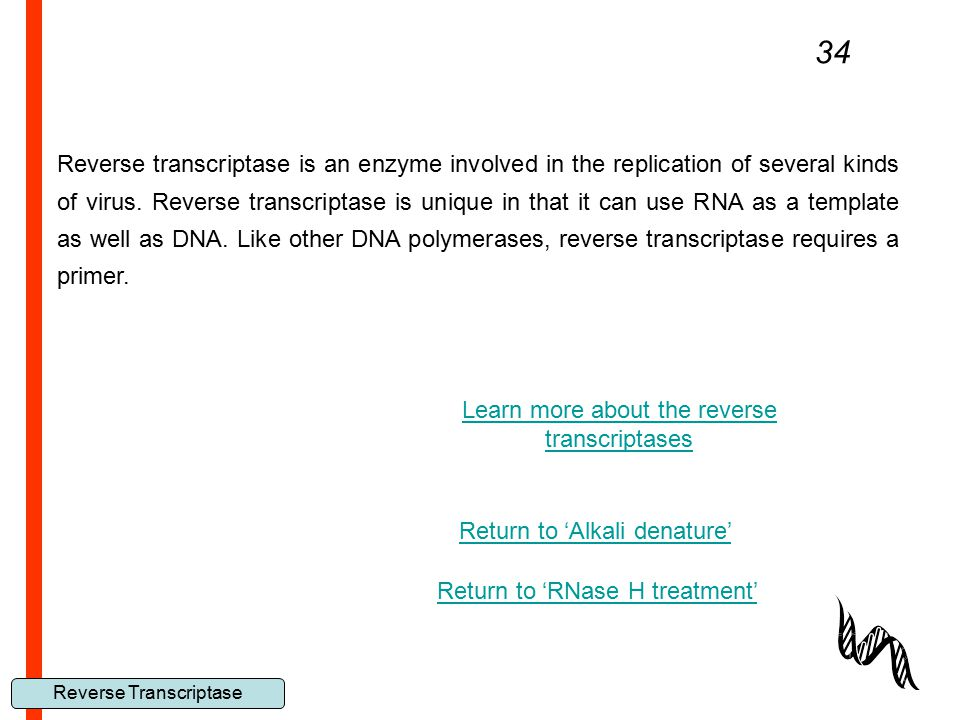 34 Reverse Transcriptase Reverse transcriptase is an enzyme involved in the replication of several kinds of virus. Reverse transcriptase is unique in