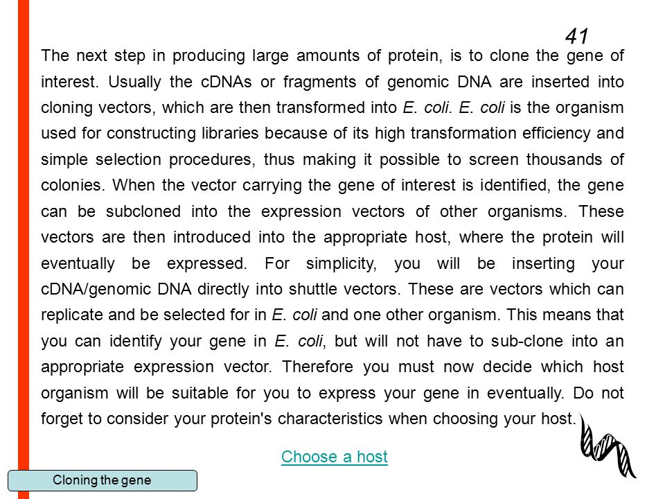 Cloning the gene 41 The next step in producing large amounts of protein, is to clone the gene of interest. Usually the cDNAs or fragments of genomic D