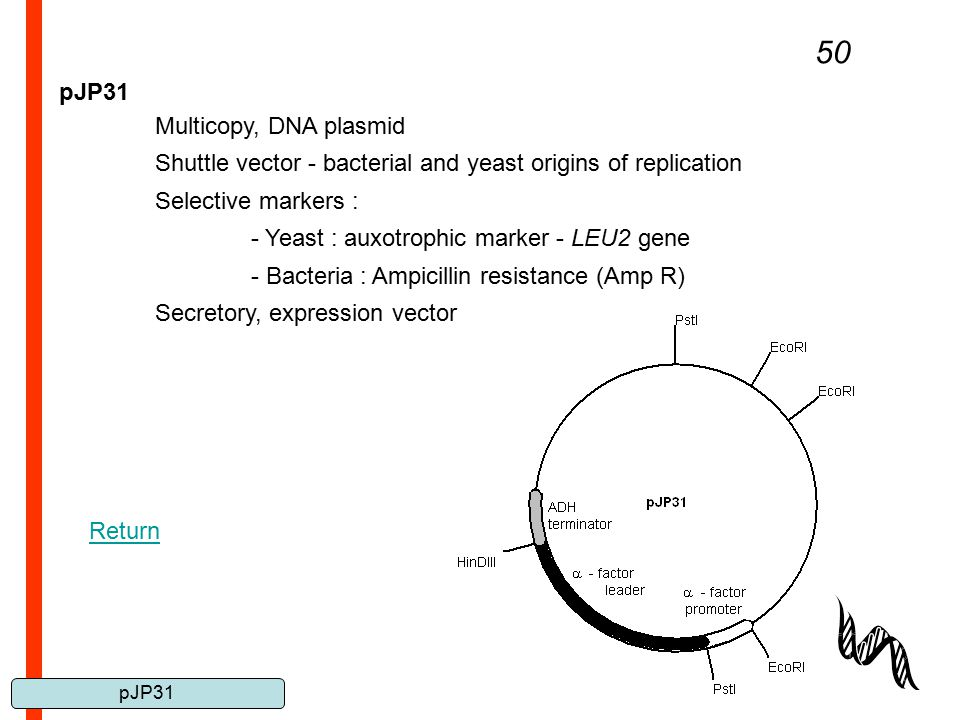 pJP31 50 pJP31 Multicopy, DNA plasmid Shuttle vector - bacterial and yeast origins of replication Selective markers : - Yeast : auxotrophic marker - L