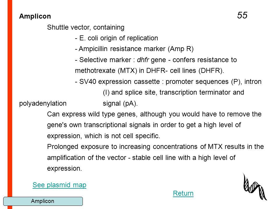 Amplicon 55 Amplicon Shuttle vector, containing - E. coli origin of replication - Ampicillin resistance marker (Amp R) - Selective marker : dhfr gene