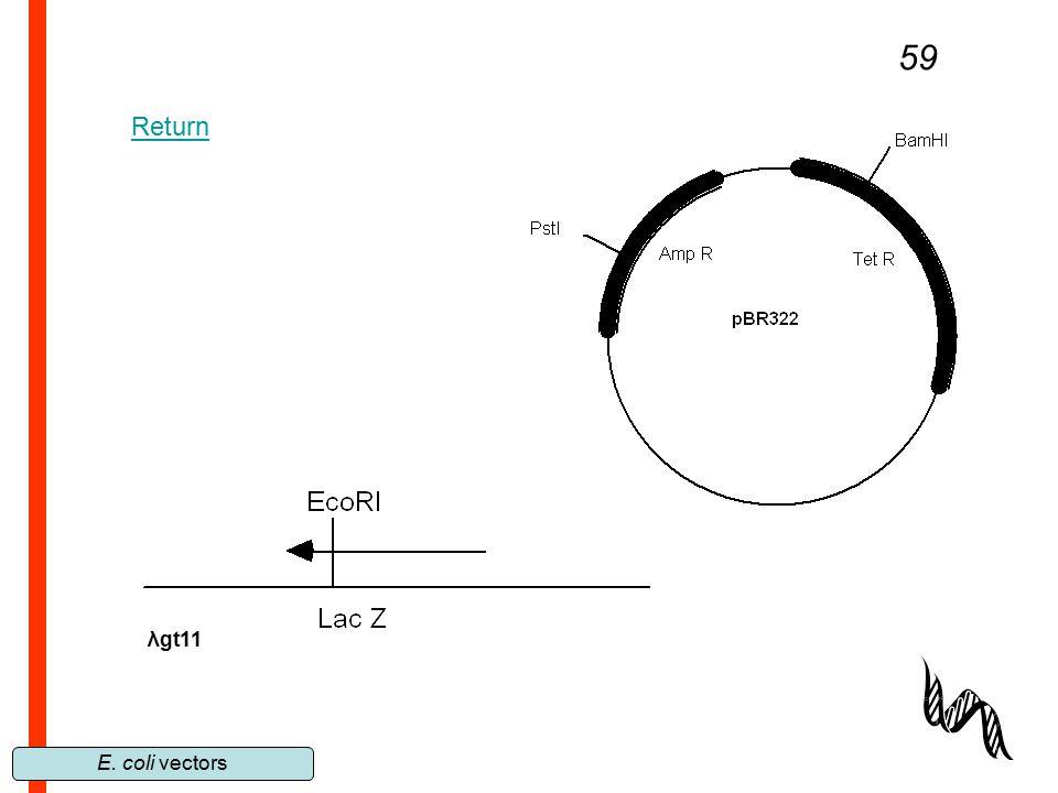 E. coli vectors 59 λgt11 Return