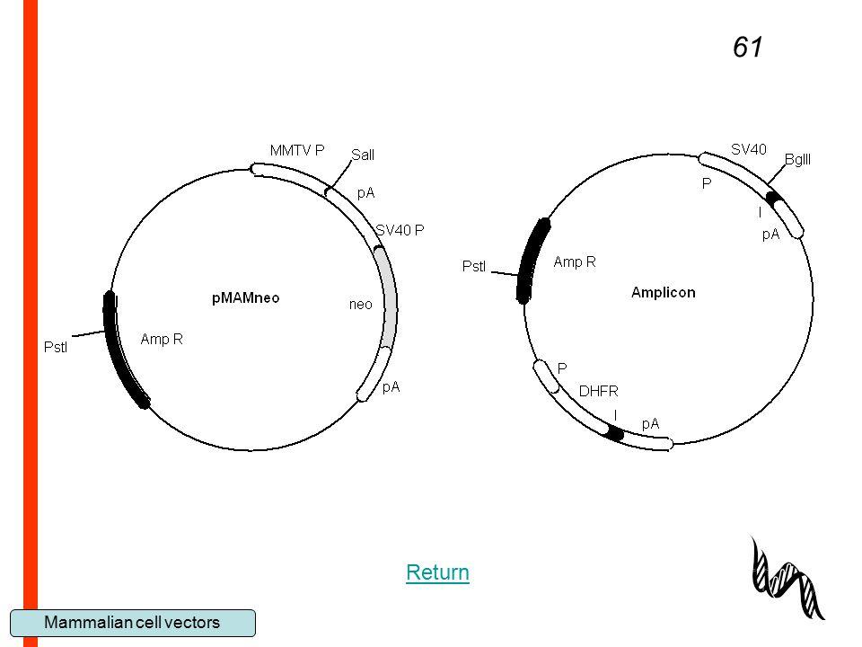 Mammalian cell vectors 61 Return