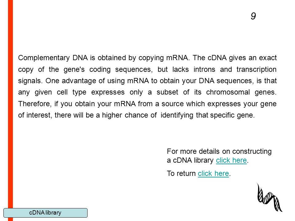 cDNA library 9 Complementary DNA is obtained by copying mRNA. The cDNA gives an exact copy of the gene's coding sequences, but lacks introns and trans