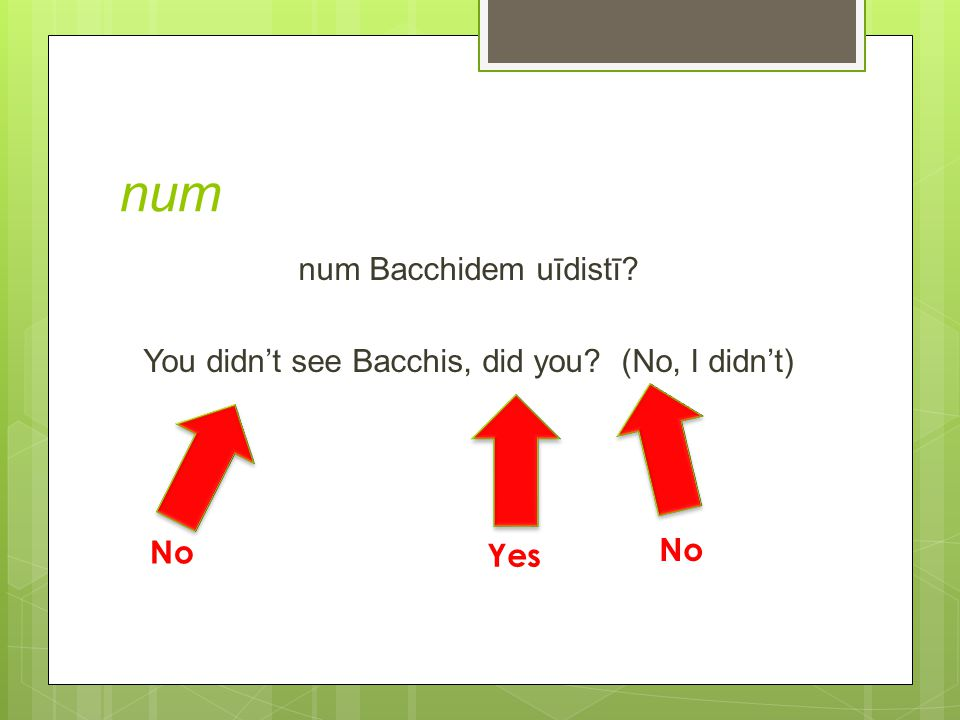 num num Bacchidem uīdistī You didn't see Bacchis, did you (No, I didn't) No Yes