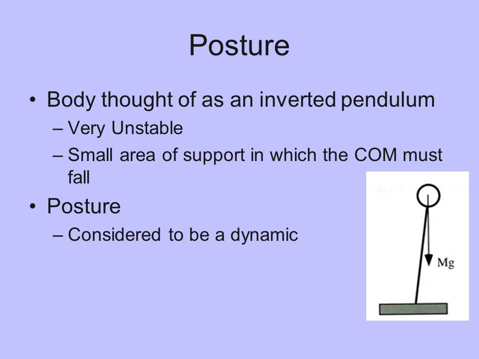 Posture Body thought of as an inverted pendulum –Very Unstable –Small area of support in which the COM must fall Posture –Considered to be a dynamic