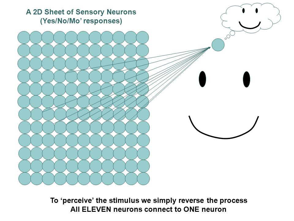 A 2D Sheet of Sensory Neurons (Yes/No/Mo' responses) The Stimulus as been 'broken down' into a 2D Map of Neural Activity The ONE stimulus is now the activity of ELEVEN neurons A highly simplified, but nevertheless instructive example.