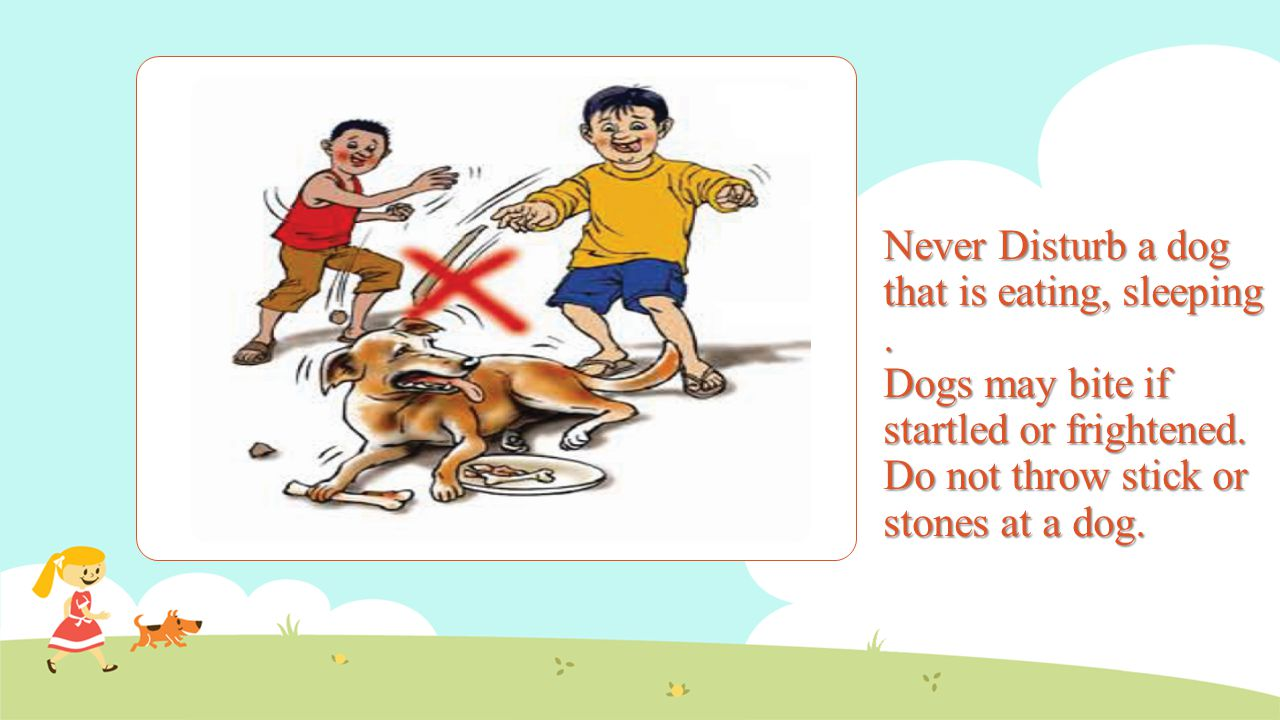 Never Disturb a dog that is eating, sleeping. Dogs may bite if startled or frightened. Do not throw stick or stones at a dog.