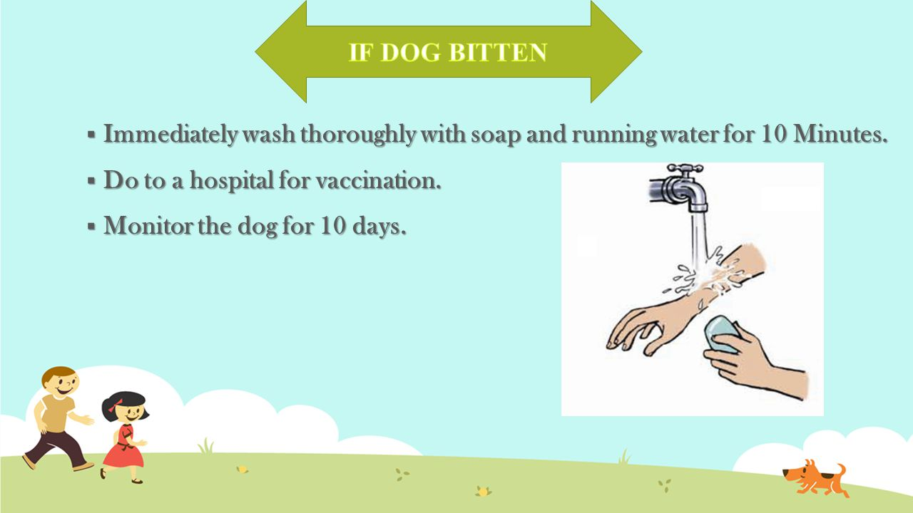  Immediately wash thoroughly with soap and running water for 10 Minutes.  Do to a hospital for vaccination.  Monitor the dog for 10 days.