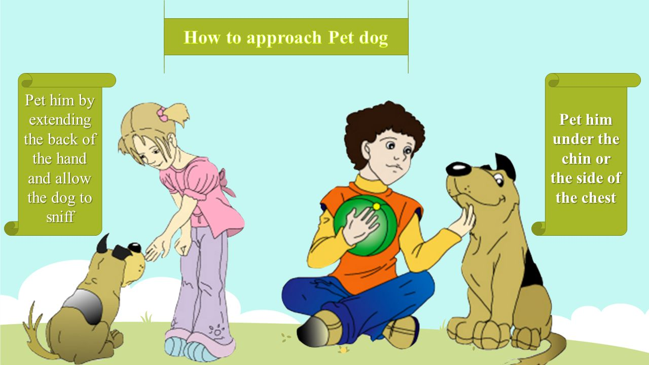 Pet him by extending the back of the hand and allow the dog to sniff Pet him under the chin or the side of the chest