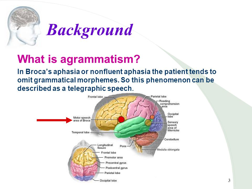 4 Background UG theory UG is a theory of linguistics that postulates principles of grammar shared by all languages, thought to be innate to humans.