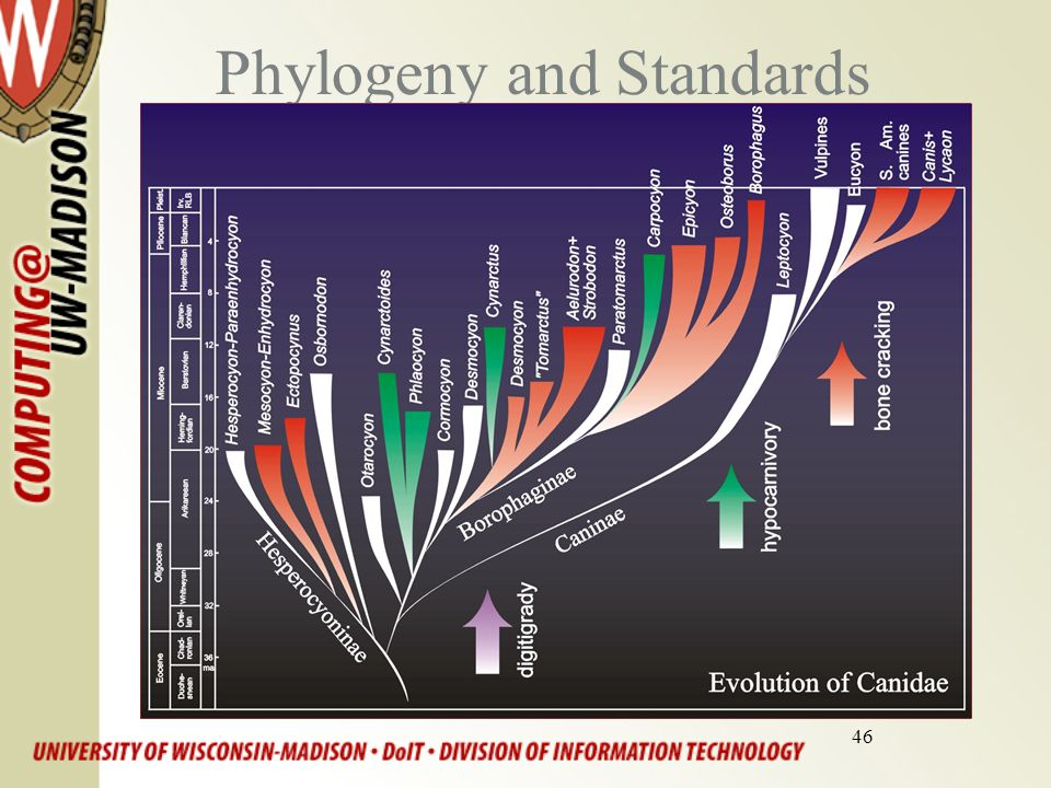 46 Phylogeny and Standards