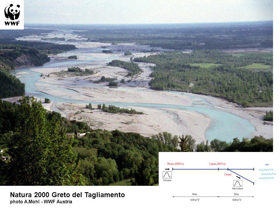 Natura 2000 Greto del Tagliamento photo A.Mohl - WWF Austria