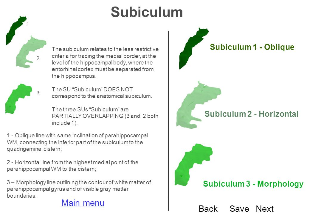 Subiculum The subiculum relates to the less restrictive criteria for tracing the medial border, at the level of the hippocampal body, where the entorhinal cortex must be separated from the hippocampus.