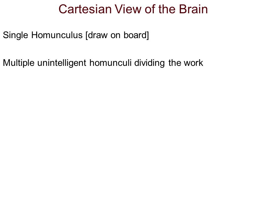Cartesian View of the Brain Single Homunculus [draw on board] Multiple unintelligent homunculi dividing the work