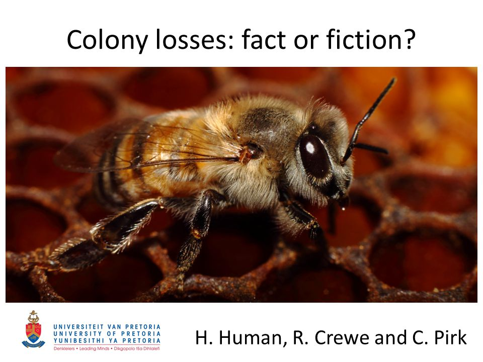 Colony losses: fact or fiction? H. Human, R. Crewe and C. Pirk