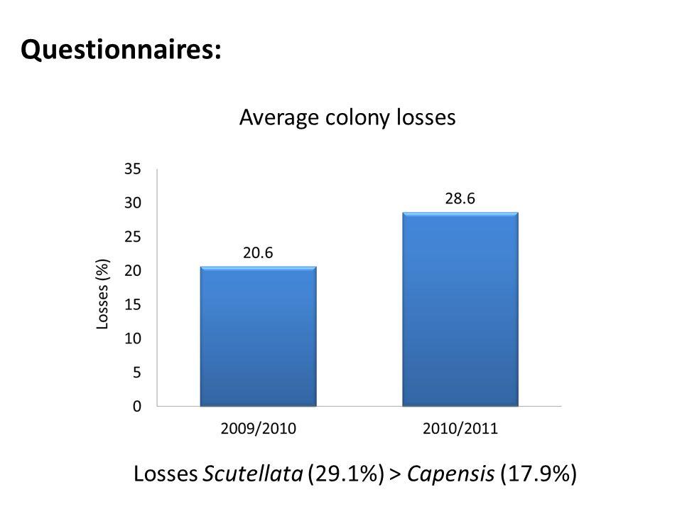 Questionnaires: Average colony losses Losses Scutellata (29.1%) > Capensis (17.9%)