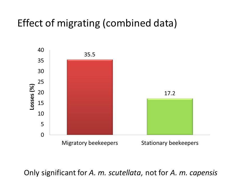 Effect of migrating (combined data) Only significant for A. m. scutellata, not for A. m. capensis