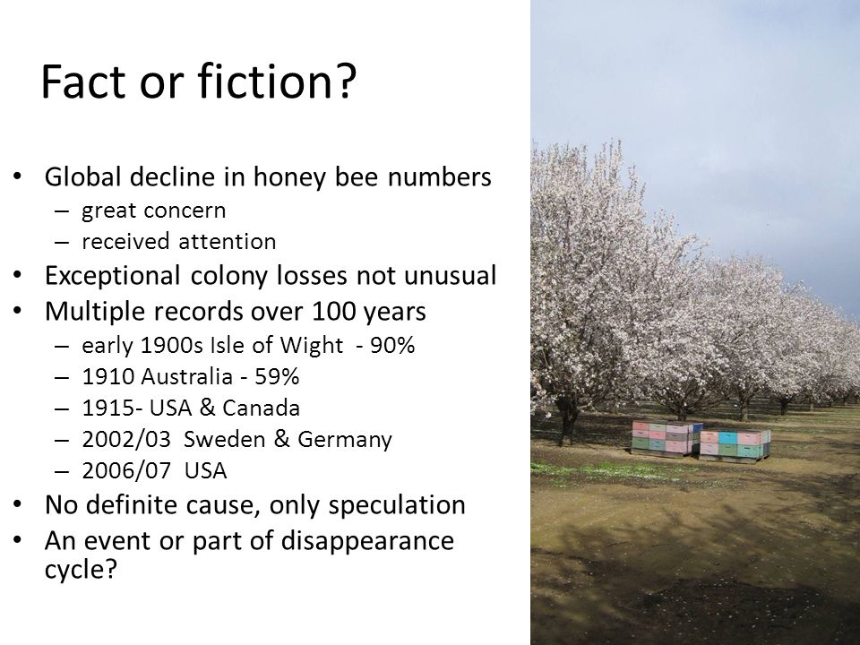Global decline in honey bee numbers – great concern – received attention Exceptional colony losses not unusual Multiple records over 100 years – early