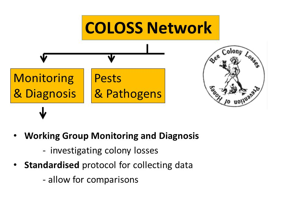 Working Group Monitoring and Diagnosis - investigating colony losses Standardised protocol for collecting data - allow for comparisons COLOSS Network
