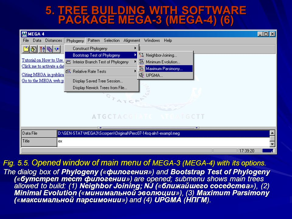 5. TREE BUILDING WITH SOFTWARE PACKAGE MEGA-3 (MEGA-4) (6) Fig. 5.5. Opened window of main menu of MEGA-3 (MEGA-4) with its options. The dialog box of