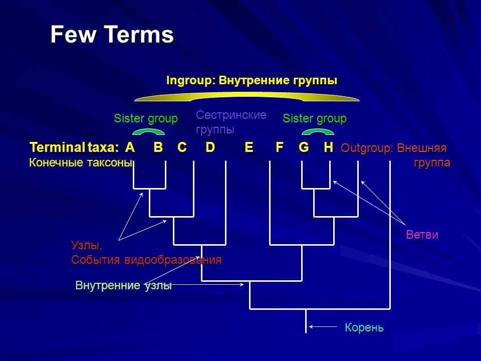 Terminal taxa: A B C D E F G H Outgroup: Внешняя Конечные таксоныгруппа Few Terms Корень Узлы, События видообразования Внутренние узлы Ветви Ingroup: Внутренние группы group Sister group Сестринские группы
