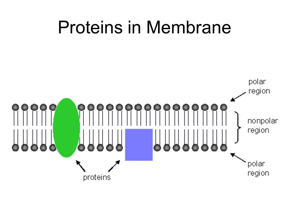 Facilitated Diffusion A protein helps the substance (like an ion) across the membrane