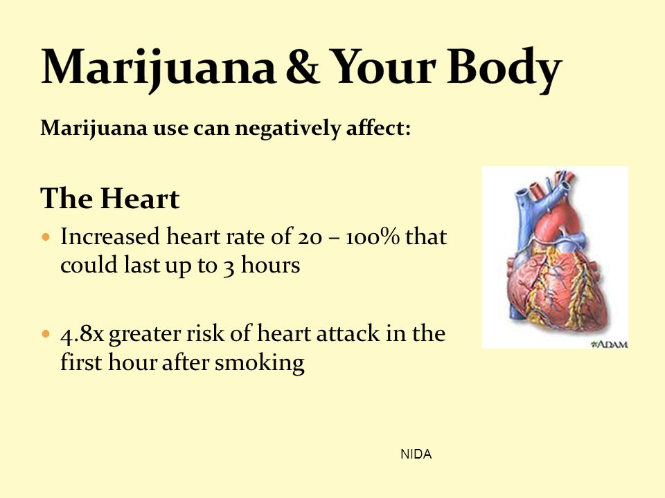 Marijuana use can negatively affect: The Heart Increased heart rate of 20 – 100% that could last up to 3 hours 4.8x greater risk of heart attack in th