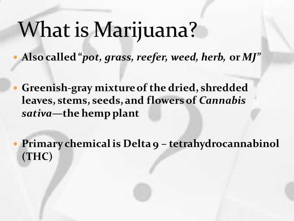 "Also called ""pot, grass, reefer, weed, herb, or MJ"" Greenish-gray mixture of the dried, shredded leaves, stems, seeds, and flowers of Cannabis sativa—"