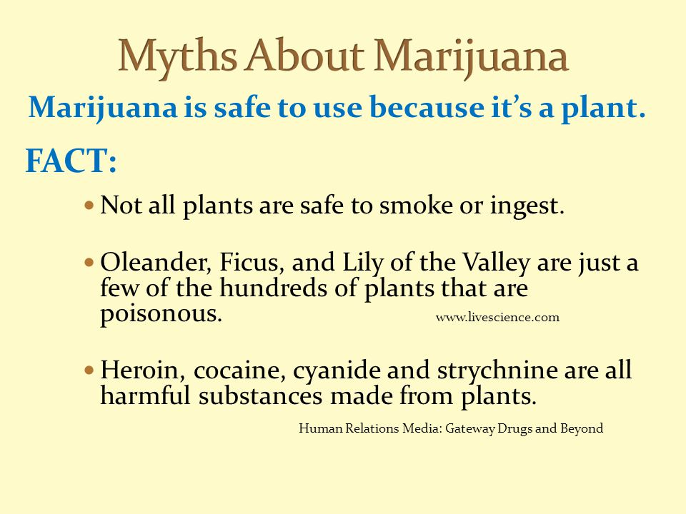Marijuana is safe to use because it's a plant. FACT: Not all plants are safe to smoke or ingest. Oleander, Ficus, and Lily of the Valley are just a fe