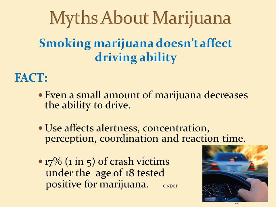 Smoking marijuana doesn't affect driving ability FACT: Even a small amount of marijuana decreases the ability to drive. Use affects alertness, concent