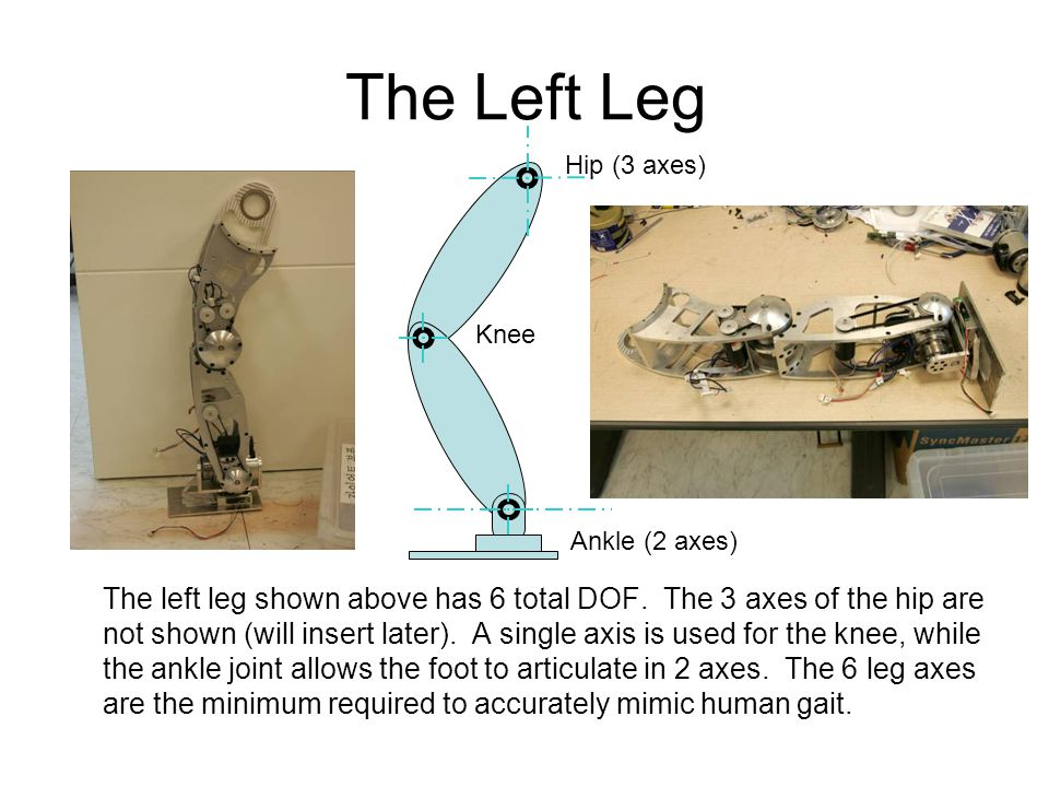 The Left Leg The left leg shown above has 6 total DOF.