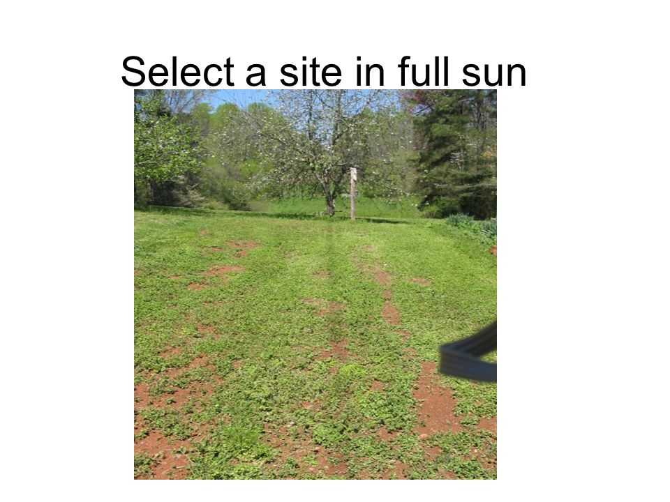 Select a site in full sun