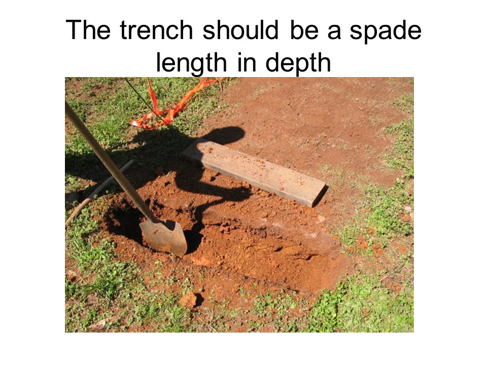 The trench should be a spade length in depth