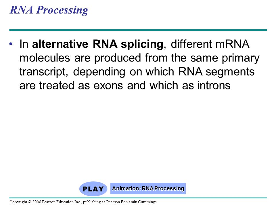 Copyright © 2008 Pearson Education Inc., publishing as Pearson Benjamin Cummings RNA Processing In alternative RNA splicing, different mRNA molecules