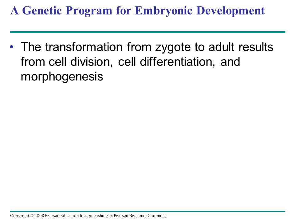 Copyright © 2008 Pearson Education Inc., publishing as Pearson Benjamin Cummings A Genetic Program for Embryonic Development The transformation from z