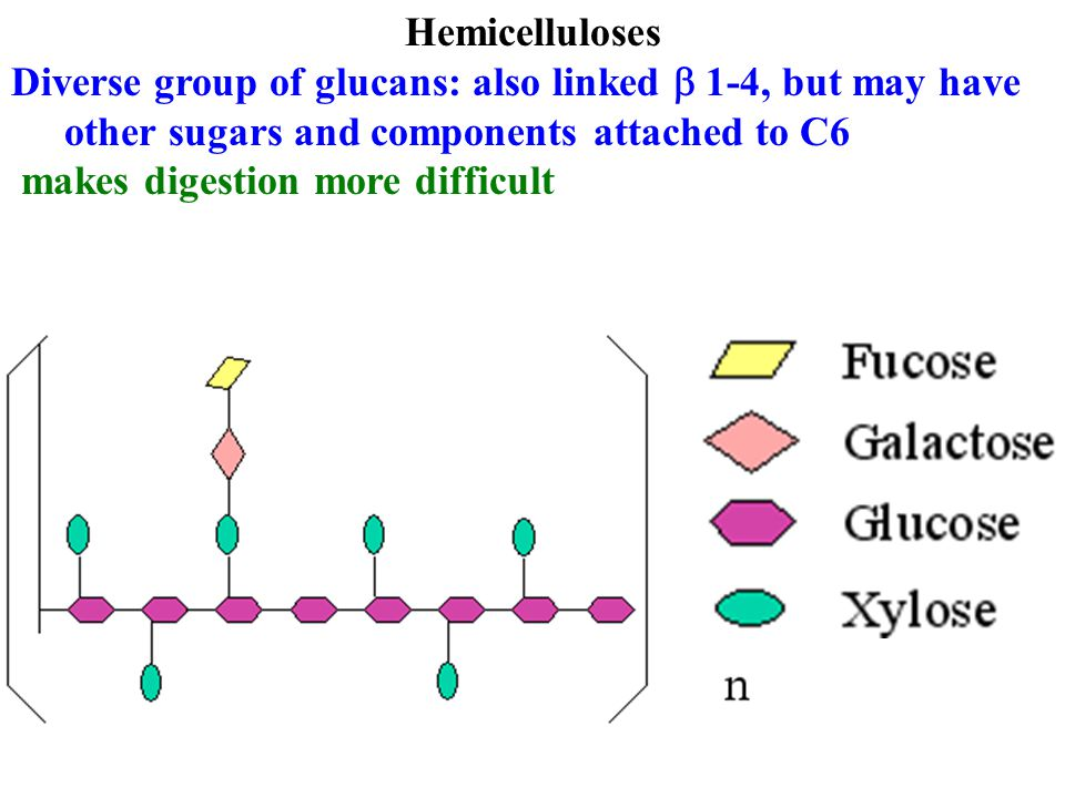 Hemicelluloses Diverse group of glucans: also linked  1-4, but may have other sugars and components attached to C6 makes digestion more difficult
