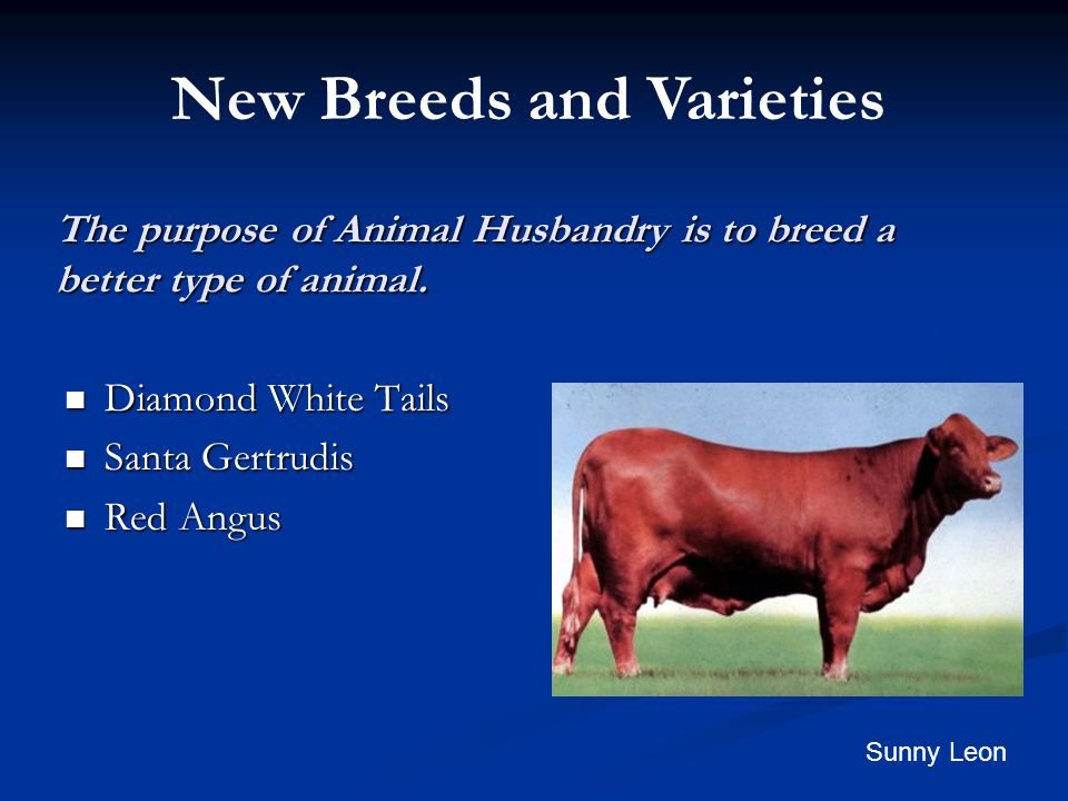 The purpose of Animal Husbandry is to breed a better type of animal.