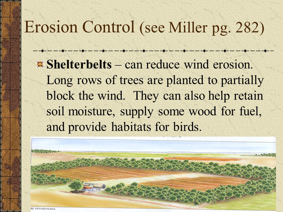 Erosion Control (see Miller pg. 282) Shelterbelts – can reduce wind erosion. Long rows of trees are planted to partially block the wind. They can also