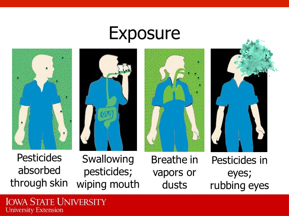 Exposure Pesticides absorbed through skin Breathe in vapors or dusts Swallowing pesticides; wiping mouth Pesticides in eyes; rubbing eyes
