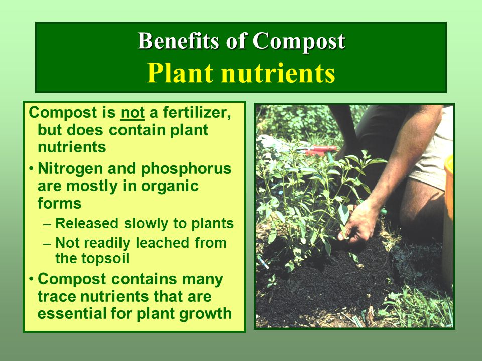 Benefits of Compost Benefits of Compost Plant nutrients Compost is not a fertilizer, but does contain plant nutrients Nitrogen and phosphorus are most