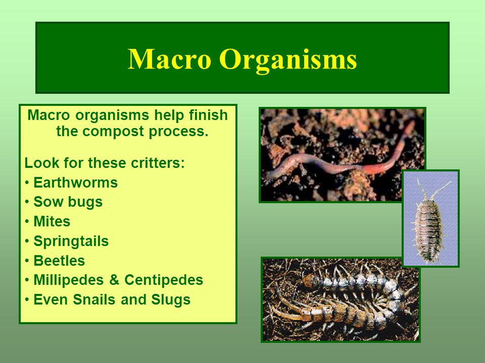 Macro Organisms Macro organisms help finish the compost process. Look for these critters: Earthworms Sow bugs Mites Springtails Beetles Millipedes & C