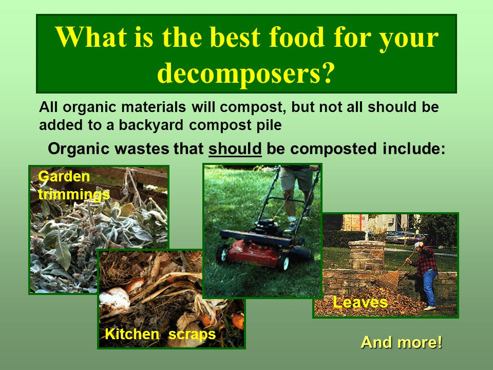 What is the best food for your decomposers? All organic materials will compost, but not all should be added to a backyard compost pile Organic wastes