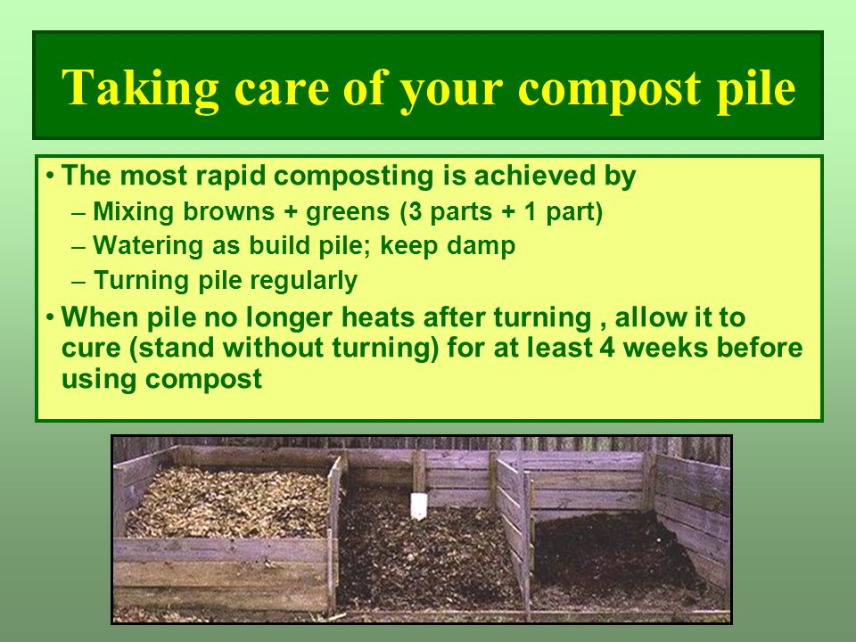 Taking care of your compost pile The most rapid composting is achieved by –Mixing browns + greens (3 parts + 1 part) –Watering as build pile; keep dam