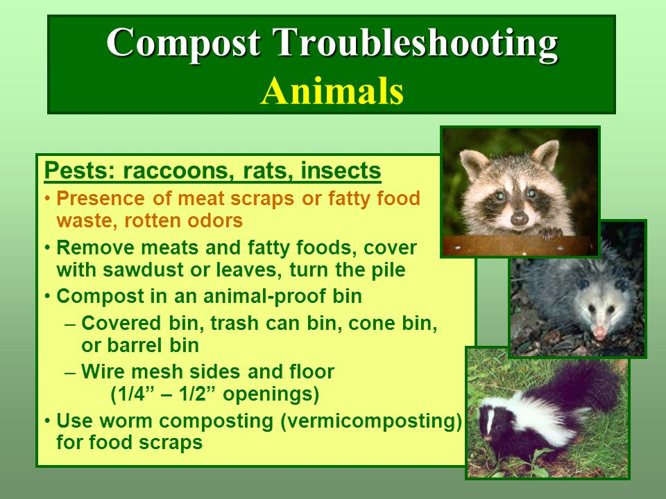 Compost Troubleshooting Compost Troubleshooting Animals Pests: raccoons, rats, insects Presence of meat scraps or fatty food waste, rotten odors Remov