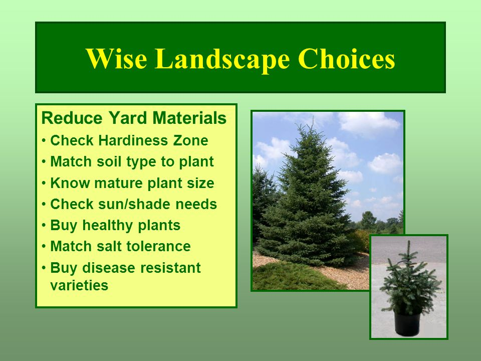 Wise Landscape Choices Reduce Yard Materials Check Hardiness Zone Match soil type to plant Know mature plant size Check sun/shade needs Buy healthy pl