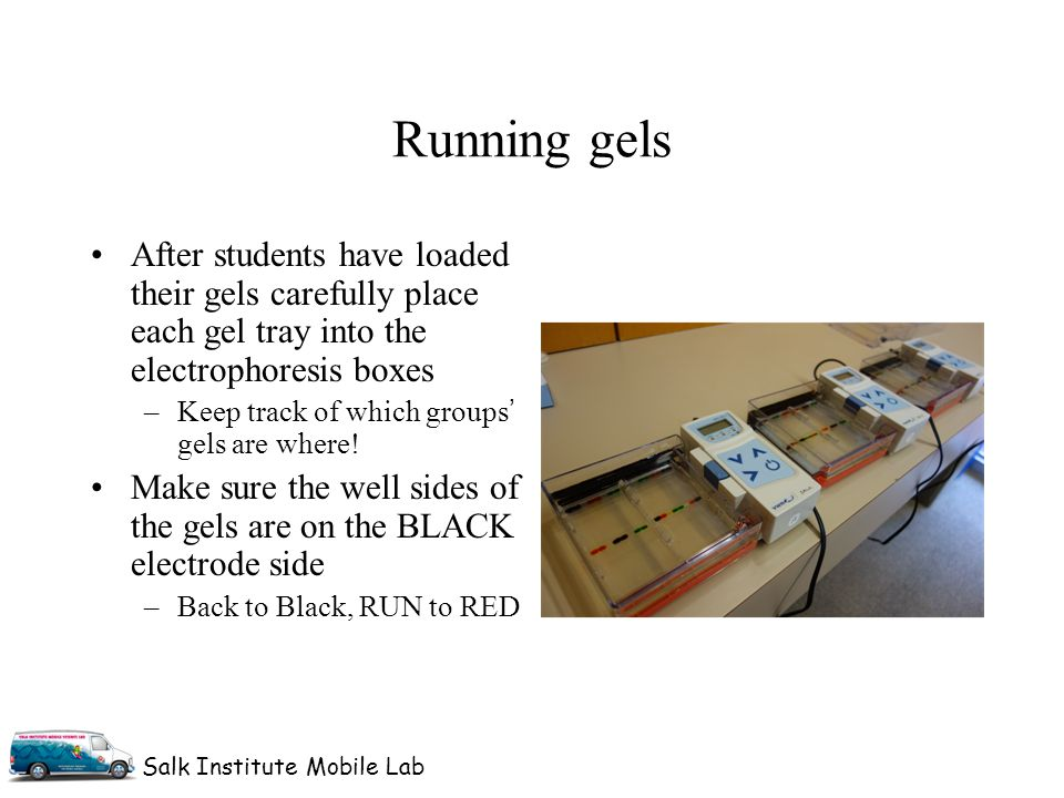 Salk Institute Mobile Lab After students have loaded their gels carefully place each gel tray into the electrophoresis boxes –Keep track of which groups' gels are where.