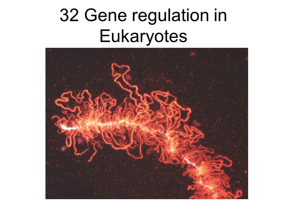 32 Gene regulation in Eukaryotes