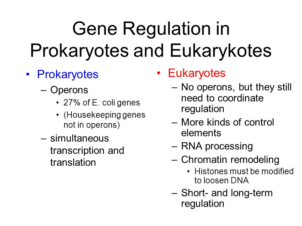 Gene Regulation in Prokaryotes and Eukarykotes Prokaryotes –Operons 27% of E.